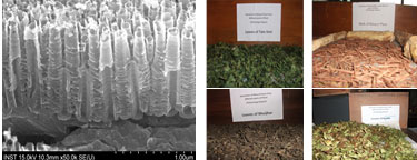Synthesis of nanomaterials  and Extraction of dye from plants of Nepal.